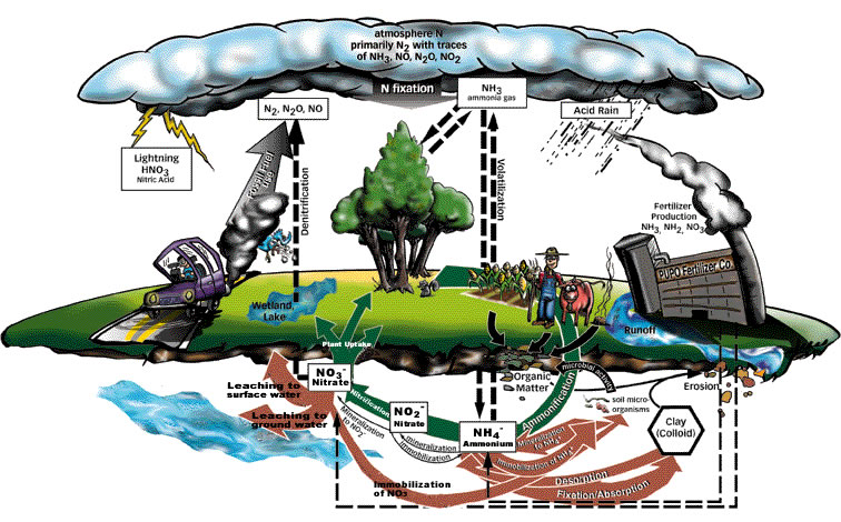 Blandy bay academy resources 2009 2012 nitrogen cycle diagram dissolved oxygen fact sheet nonpoint source pollution esa nitrate fact sheet phosphorus fact sheet turbidity fact sheet ccuart Gallery